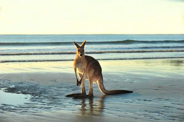 Australische Lotterien