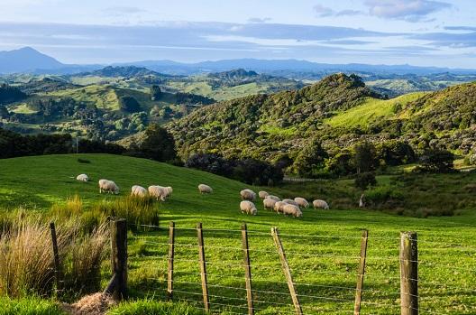 Apresentando novas loterias da Nova Zelândia e Eslováquia!